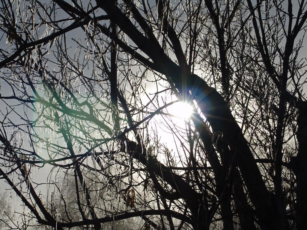Winter_Tree_Icicles