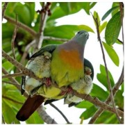 bird protecting young
