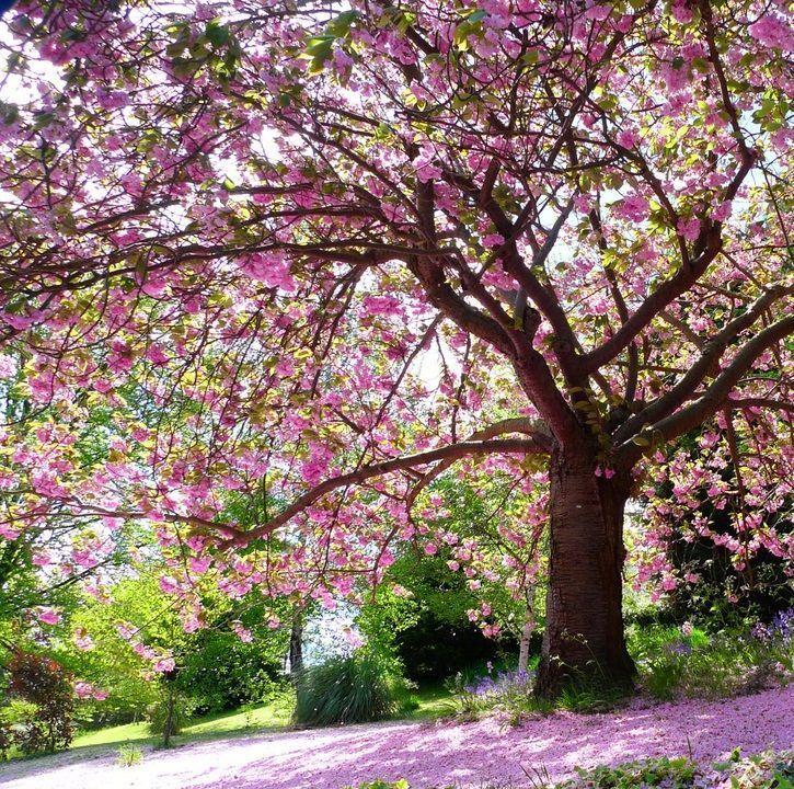 spring tree2