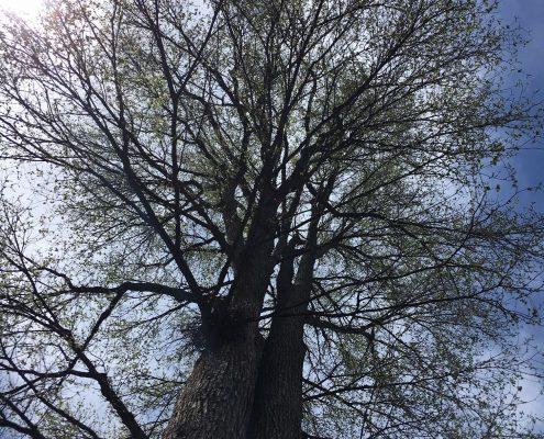 tree i stood under - climate mobilization
